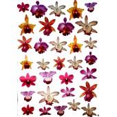 Декупажная карта для техники Sospeso Trasparante STO, 35х50 cм, Орхидеи