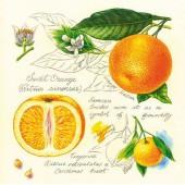 "Салфетка для декупажа ""Апельсины botanical"" бумажная, 33х33 см, на фото 1/4 салфетки, SDL993000"