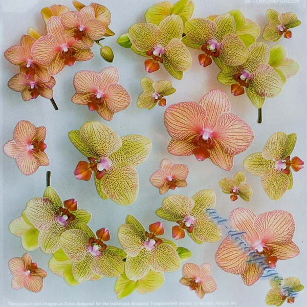 Самоклеящаяся плёнка с печатью для техники Sospeso Trasparente 06-Orchid Green