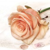 "Салфетка для декупажа ""Кремовая роза на письме"" бумажная SLOG028701, 33х33 см"