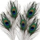 Перья павлина декоративные натуральные, 5 шт., 20-30 см, арт. 1003410, EFCO