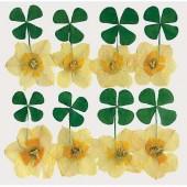Сухоцветы для декора Stamperia, CLFS04, Листья клевера и белые цветы, 13х17,5 см