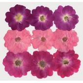 Сухоцветы для декора Stamperia, CLFS12, Микс из розовых цветов, 13х17,5 см