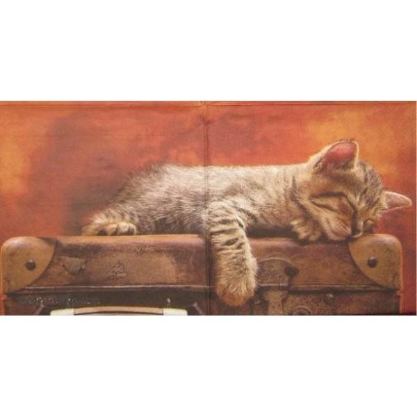 Картинка котенок спящий на чемодане